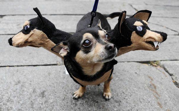 deguisements halloween pour animaux cerbere   Déguisements Halloween pour animaux   tortue Starwars python photo oie Miley Cyrus lézard Indi...
