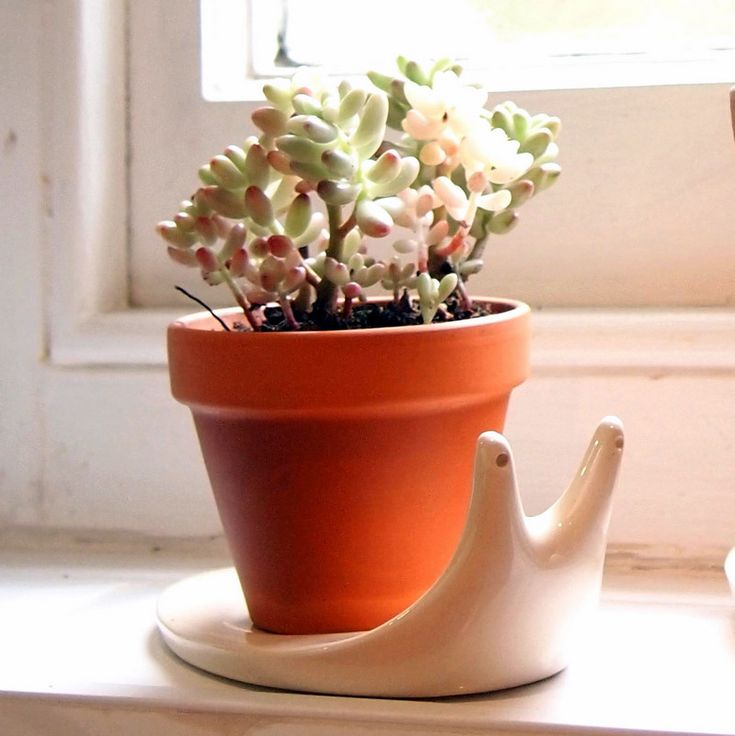 Snail Plant Pot - I've got to have Casey make some of these!
