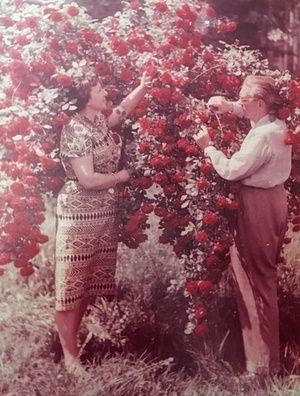 Szétbombázott telekből burjánzó kert - egy kalandos életű újságíró csak egy kertecskét akart, ami mára egy nagy fajgazdagságú kis sziget a Rózsadombon.