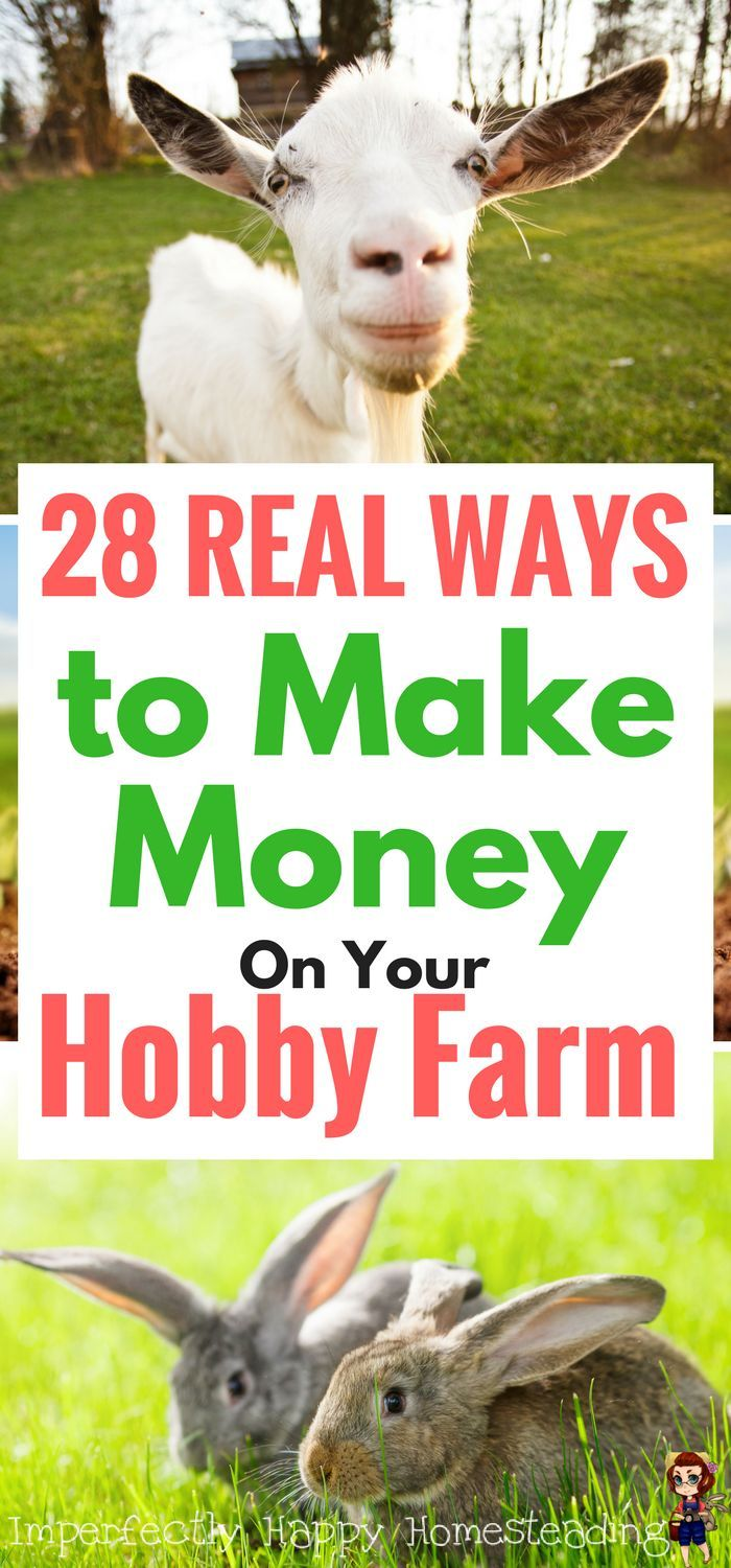 Make money on your hobby farm or small homestead with these 28 ideas.
