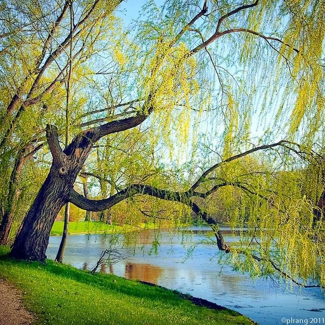 Wilanow Park in the springtime, Warsaw