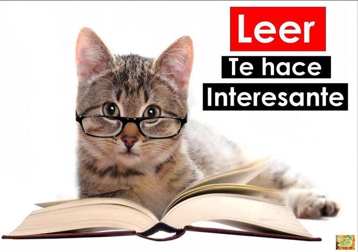 Gato estudiando | dia del libro | Pinterest