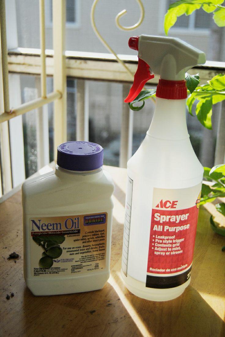 1000+ ideas about Whitefly on Pinterest | Spider Mites ...
