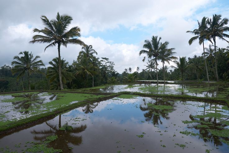 Rice paddies, Bali, Indonesia [OC] [3872x2592]