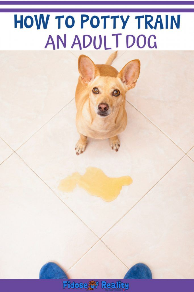 How To Potty Train An Adult Dog Training Your Puppy Training