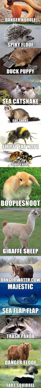 Me encantan los memes de animales