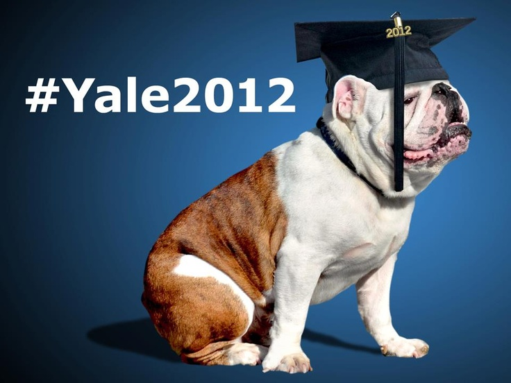 yale bulldog days 13 best bulldogs images on pinterest colleges 3071