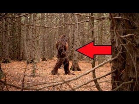 5 Crazy BIGFOOT Sightings Caught on Camera (2016) - YouTube