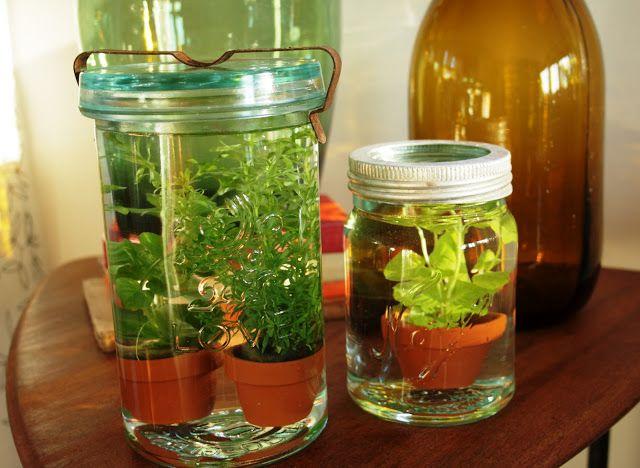 Vannplanter brukes hovedsakelig i akvarium, men har du tenkt på hva du kan gjøre med et par utstilte Norgesglass, pyntestein og riktig belysning/plassering? Her har du mange muligheter, og som Fragmenter sriver, du trenger ikke dra lenger enn til Ikea (eller nærmeste dyrebutikk) (Av Fragmenter)