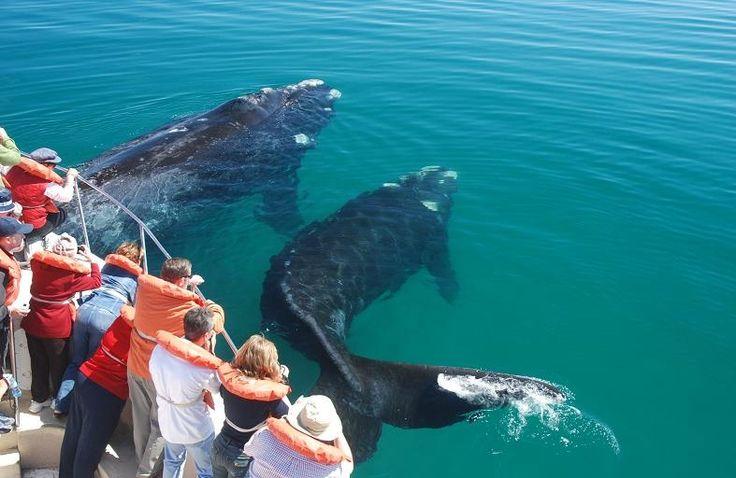 Península Valdés es un accidente costero sobre el mar Argentino, en la provincia del Chubut declarado Patrimonio de la Humanidad por la Unesco, que recibe