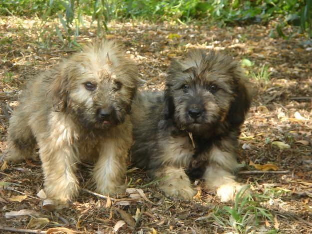 Cachorros de gos d`atura