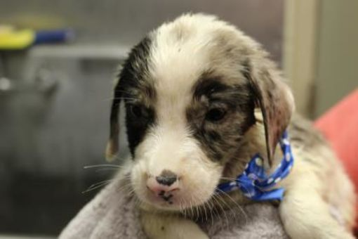 Cleveland Al Labrador Retriever Meet Spider A Dog For Adoption Labrador Retriever Dogs