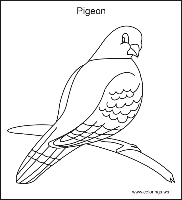 free pigeon kids colorings pages you can print and color - Coloring Pages For Kids Birds