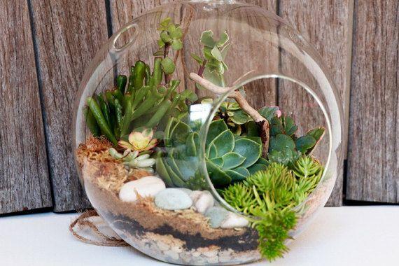 Succulent terrarium kit , Hanging succulent terrarium, Large glass terrarium, DIY terrarium kit, , Succulent garden