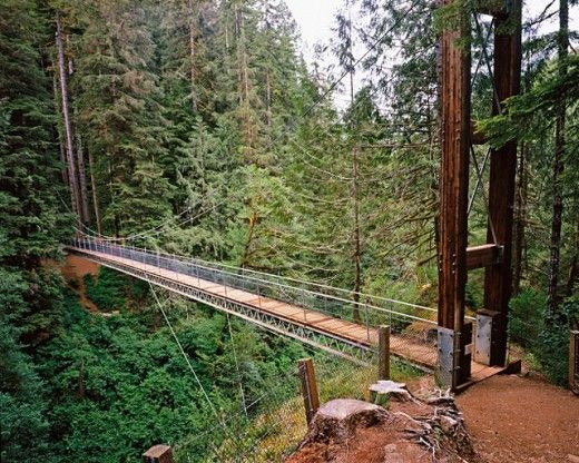 Drift Creek Falls Suspension Bridge. Oregon. USA : Stock Photo
