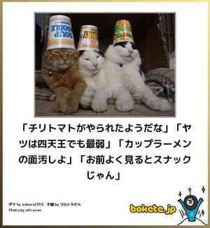 【かわいいボケてをご覧ください】 【猫ボケて特集】おもしろネコだけの笑える「bokete」画像50選 – ページ 7 – ペットライフ