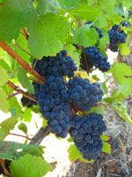 10 Of The Best Organic Wines Without Sulfites | Organic Wine