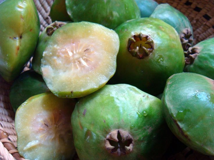 as-frutas-raras-do-brasil-mangaba-Presentes da Terra.