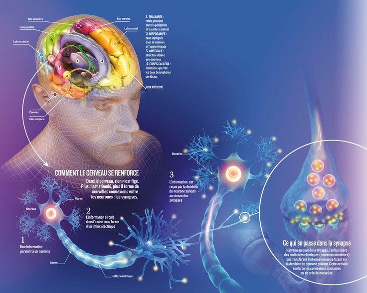 voyage au coeur du cerveau