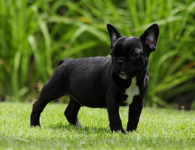 Dog Kennels For Sale In Sacramento Ca