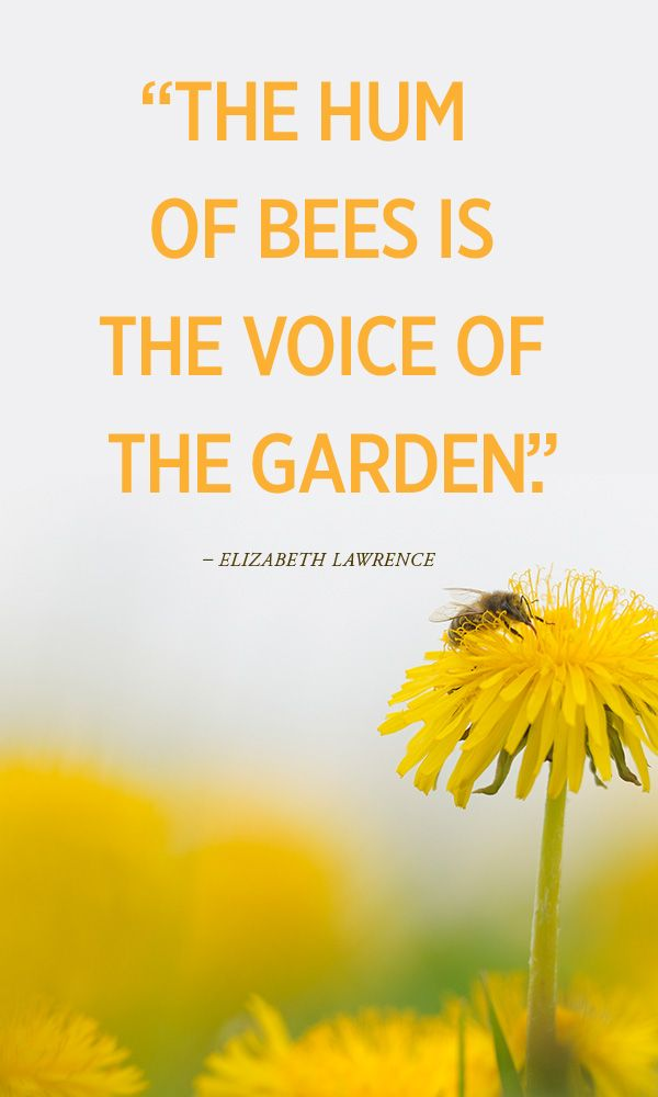 """The hum of bees in the voice of the garden"": Honey bees and other pollinators sustain one third of all the food we eat. Our world, and our diets, would be very different without them. #Bees"