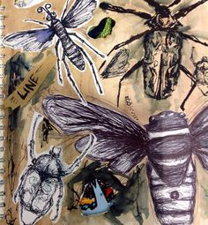 insect inspired line drawing - Google Search