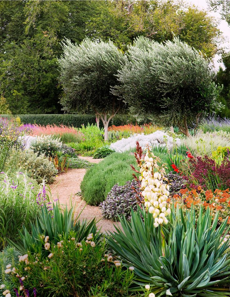 low water plantings - home and garden.  LOVE all the colors.  Love that it's wild yet perfectly placed.  Olive trees are great.  No weed looking grasses.