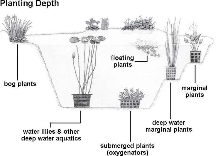 How to Acclimate and Plant Your Pond Plants - Pond Pet Care Corner - PetSolutions