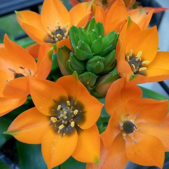 Fiori Arancioni.Pin Su Plant Wishlist