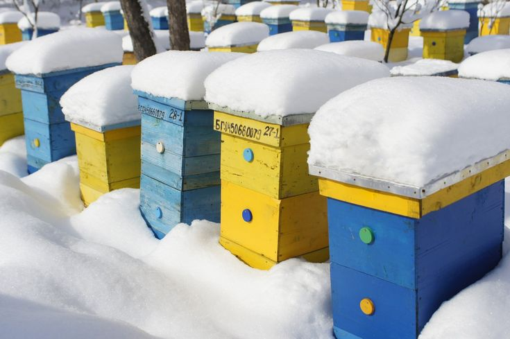 Beekeeping Supplies from PerfectBee