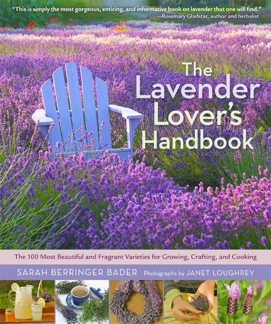 The Lavender Lover's Handbook: The 100 Most Beautiful and Fragrant Varieties for Growing, Crafting, and Cooking from Timber PressLovers Handbook, Ice Cream Recipe, Lavender Lovers, Beautiful, Sarah Berringer, Herbs Gardens, Lavender Recipe, Fragrant Varieties, Purple Flower