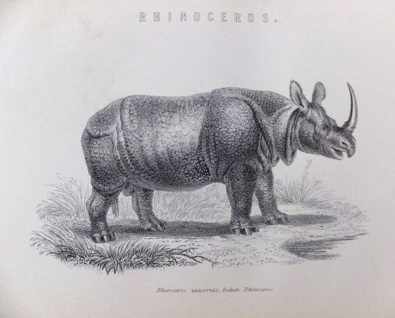 Rhinoceros Black and White Print of Rhino by PeonyandThistlePaper, £8.00