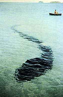 """COVERT SCIENCE-December 12,1964,  Queensland, Australia. Photographer Robert Serrec was in a small row boat just off the coast with family and friends when they noticed a giant snake-like creature lying on the ocean floor in less than 6 ft of water. They said it was grayish & tadpole-like, with a snake-like head, and was approx.75-80 feet long (!). There appeared to be a large wound on the creature's back.They took pictures before it became annoyed & swam off. """"Passing Strange-1910-2013"""""""