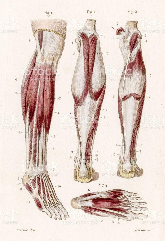 Mejores 12 imágenes de Human Anatomy en Pinterest   Anatomía humana ...