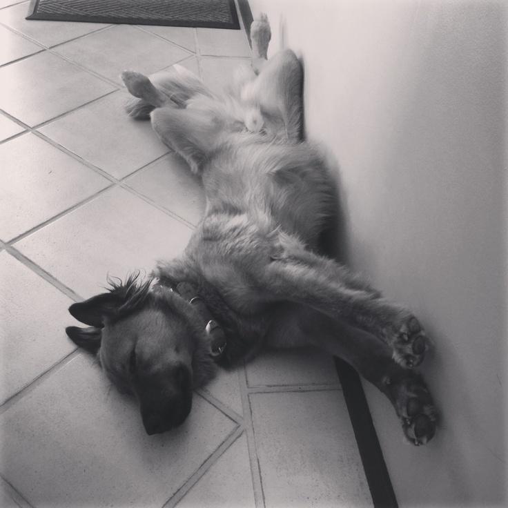 Sleepy Bernard