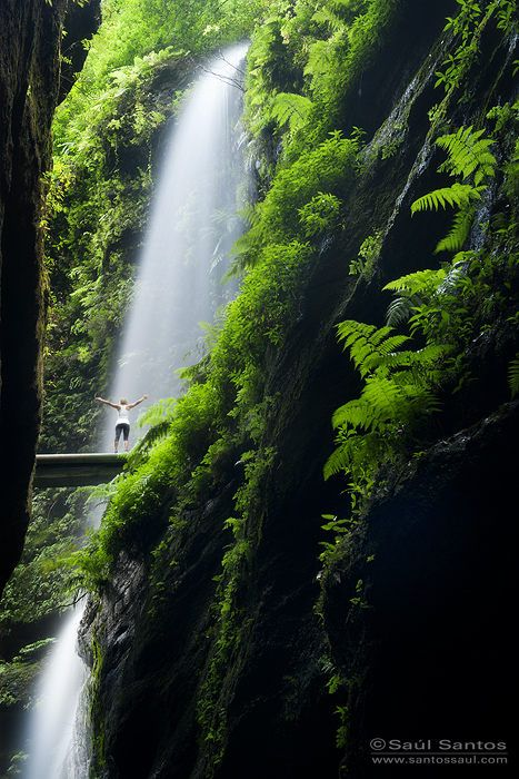 hiking to Barranco de Los Tilos, Isla de La Palma, Canarias. Spain Saul Santos Diaz - photographer