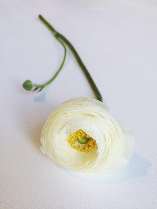 White ranunculus. #Flower #Wedding #Pretty #Summer