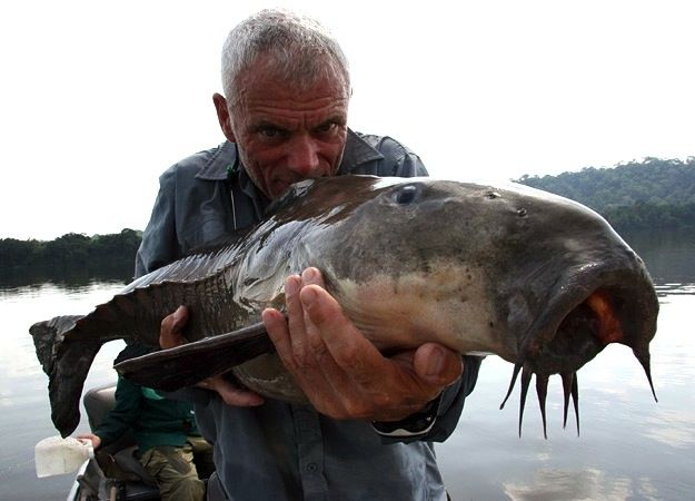 Jeremy Wade - A Cuiu-Cuiu, a prehistoric-looking catfish found in the Orinoco and surrounding rivers of the Amazon. The Cuiu-Cuiu can grow to 3 feet in length and weigh over 40 pounds. - animal.discovery.com