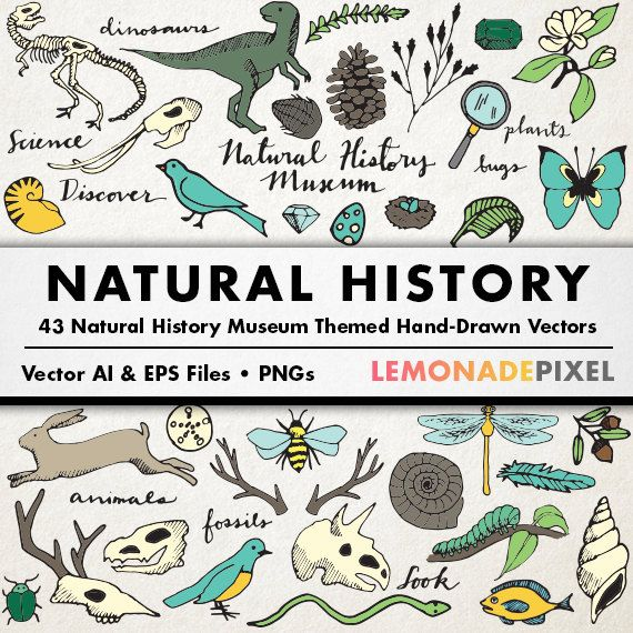 Natural History Museum Clipart - dinosaurs, butterflies, bugs, animals, fossils, and plants clip art - nature party theme, wilderness theme