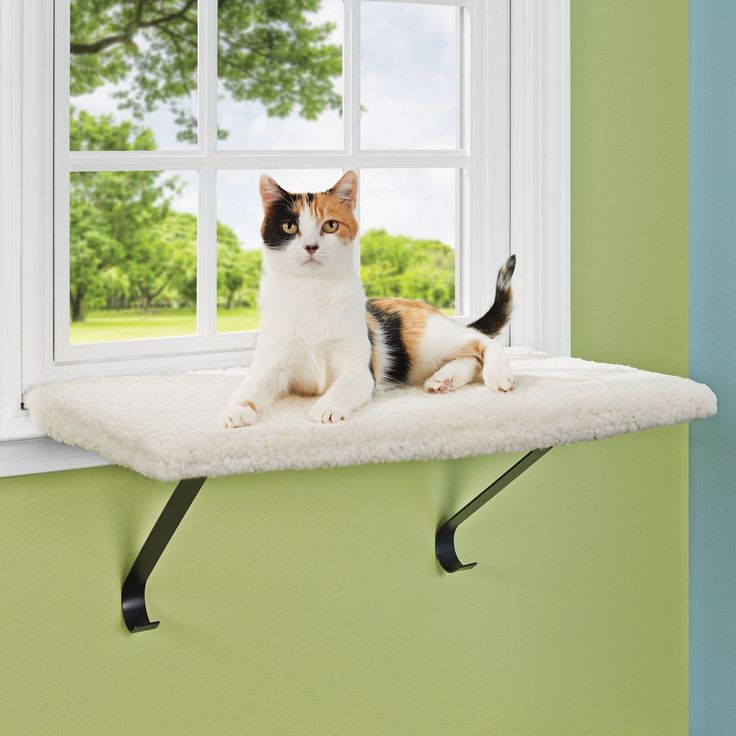 1000 ideas about cat window perch on pinterest cat. Black Bedroom Furniture Sets. Home Design Ideas