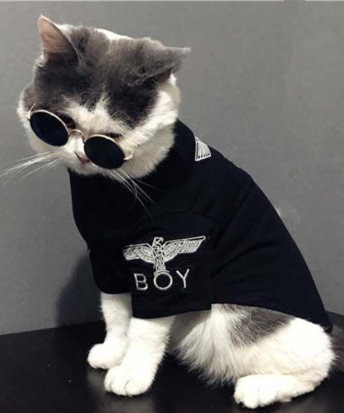 ボーイロンドン最新作 犬服 tシャツ boy london 小型犬洋服 猫服 イーグルboy刺繍柄 ペットウェア♡