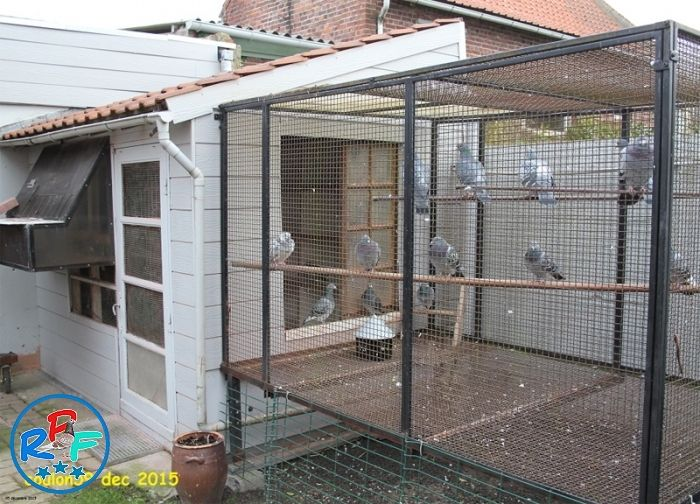 Pigeon Loft Design Ideas And Pigeon Loft Plan Pigeon Loft Design Pigeon Loft Loft Design