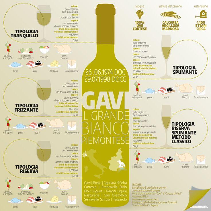 Gavi: il grande bianco piemontese   #infographic #gavi #wine #piedmont #italy