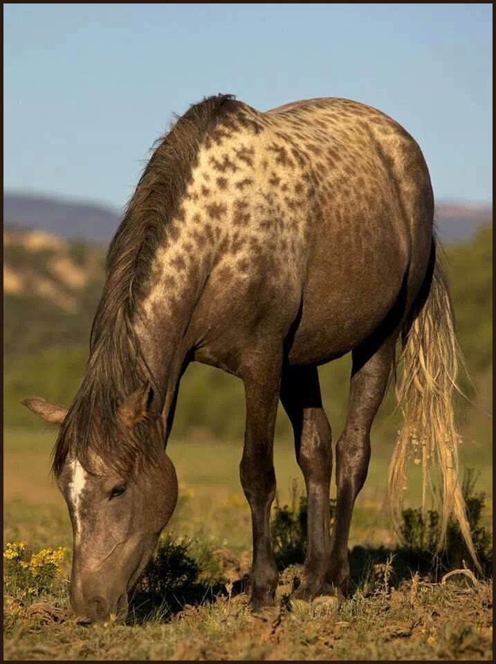 Mustang with rare AAA special leopard complex gene...