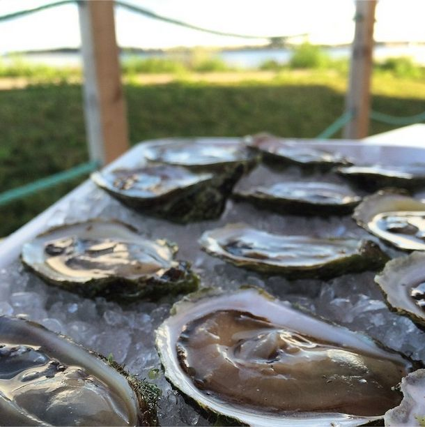 Oysters at The Lobster Shack in Souris. Photo by the talented Melissa Pasanen. http://instagram.com/p/rkvaJDgCZP/