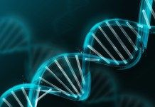 WiFi Frequency Could Be Changing Your DNA
