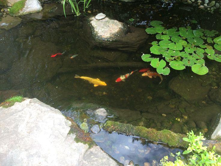 Best 25 Pond Pumps Ideas On Pinterest Tire Pond Pond