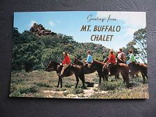 Mt Buffalo Chalet Horse Riding Party