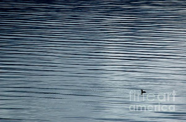Solitary Loon On Kootenay Lake, British Columbia.  Fine Art Photography   http://rob-huntley.artistwebsites.com   © Rob Huntley