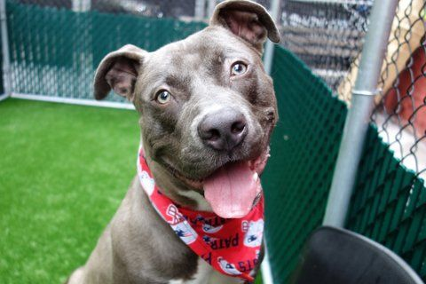 MONK2_A1115709_TO BE DESTROYED 06/28/17 **